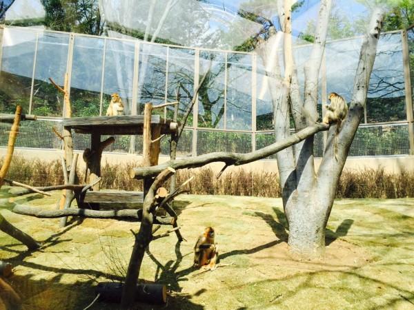 황금 원숭이의 사진