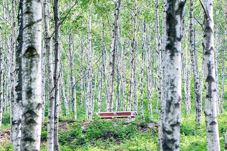 서후리숲001