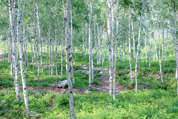 서후리숲018