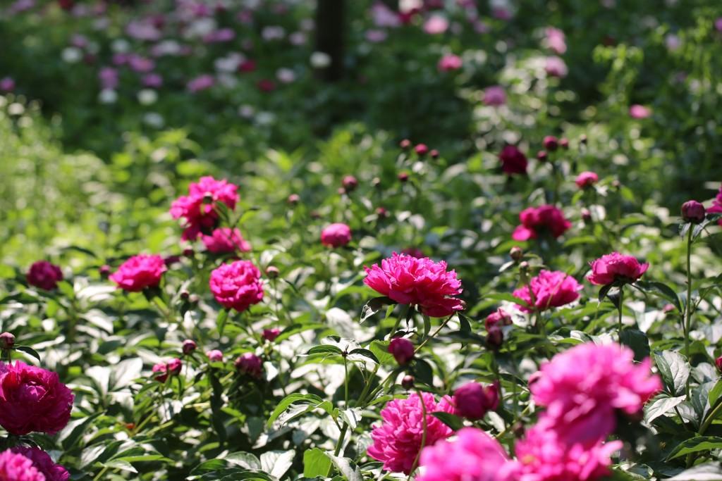 식물원 118