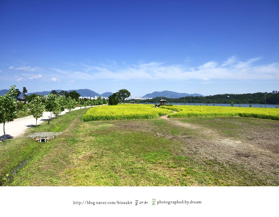멀리 보이는 유채꽃 밭