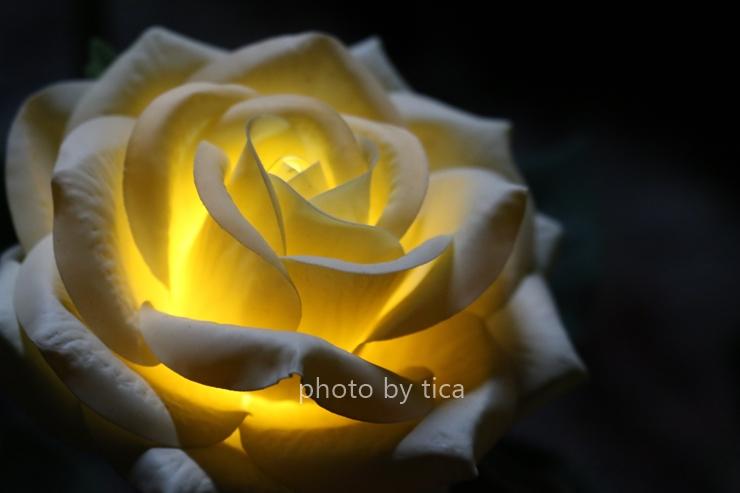 밝게 빛나는 꽃