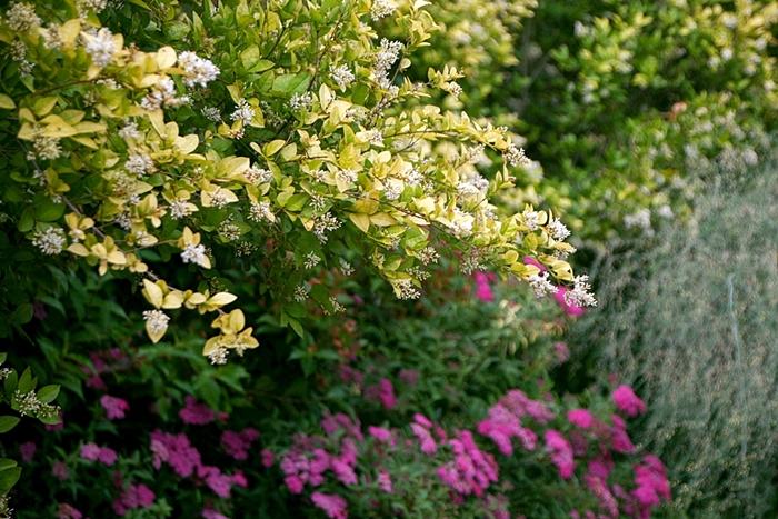 들꽃수목원007