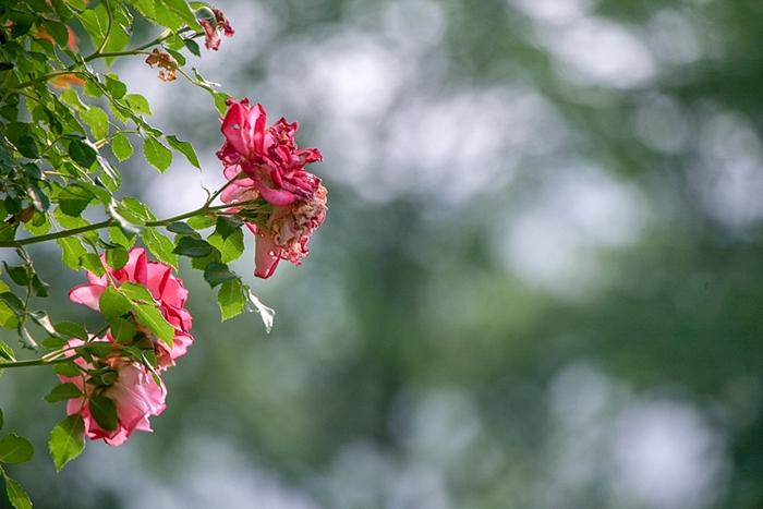 들꽃수목원014