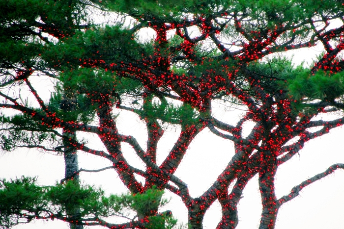들꽃수목원022