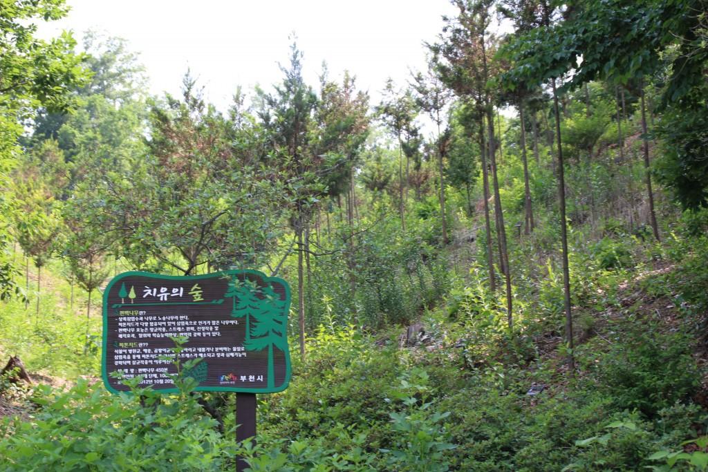 부천100송이장미공원,무릉도원수목원 202