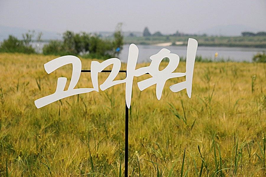 사본 -일괄편집_IMG_5309
