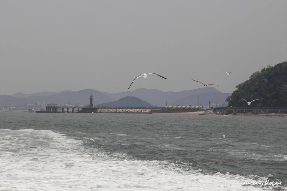 바다위를 날아가는 갈매기떼
