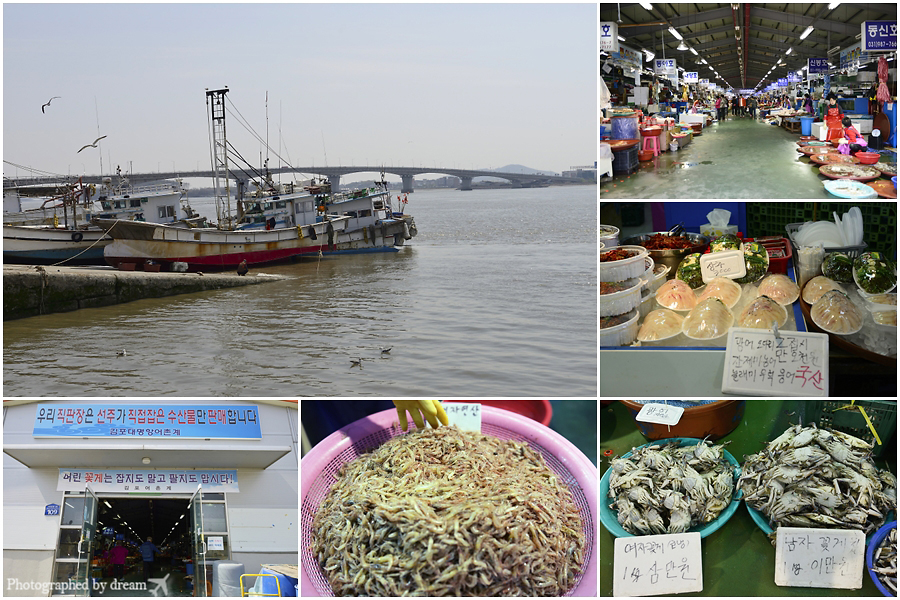 다양한 해산물들