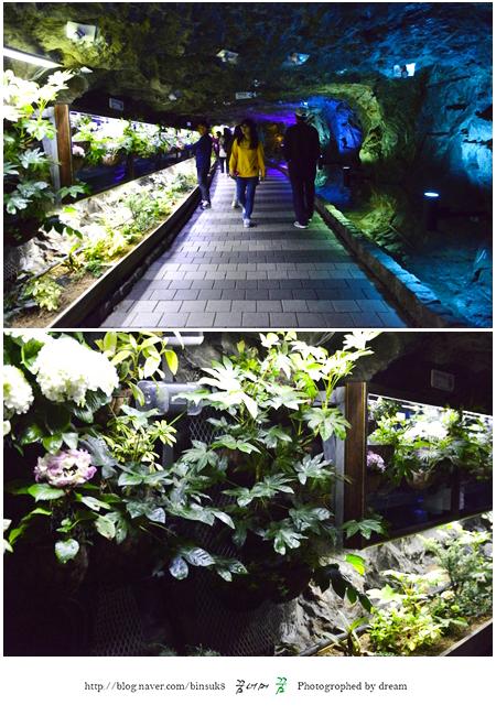 동굴 속 식물원을 구경하는 사람들