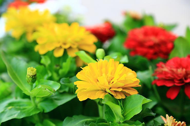 만개한 꽃