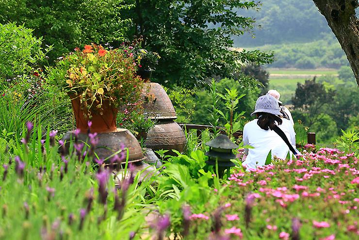꽃을 구경하는 관람객