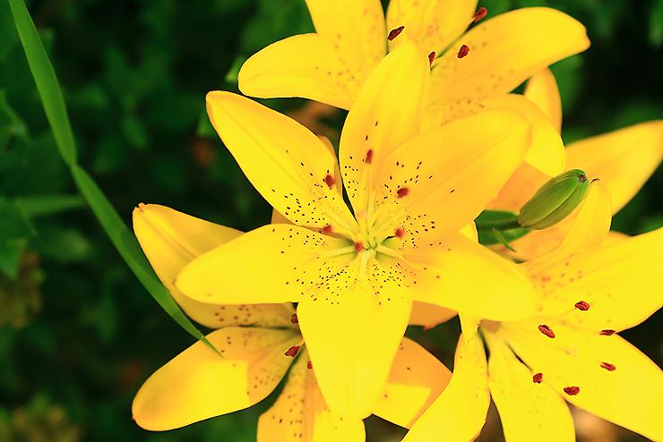 활짝 핀 노란꽃