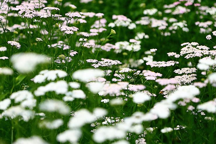화단에 가득 핀 꽃들