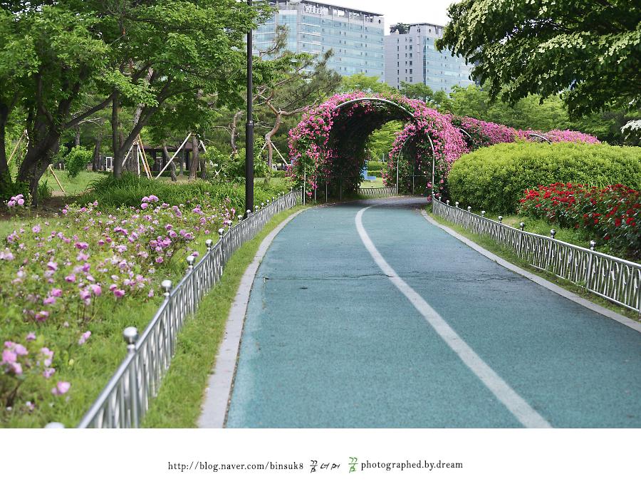 장미공원 꽃길