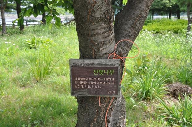 나무에 걸린 설명판