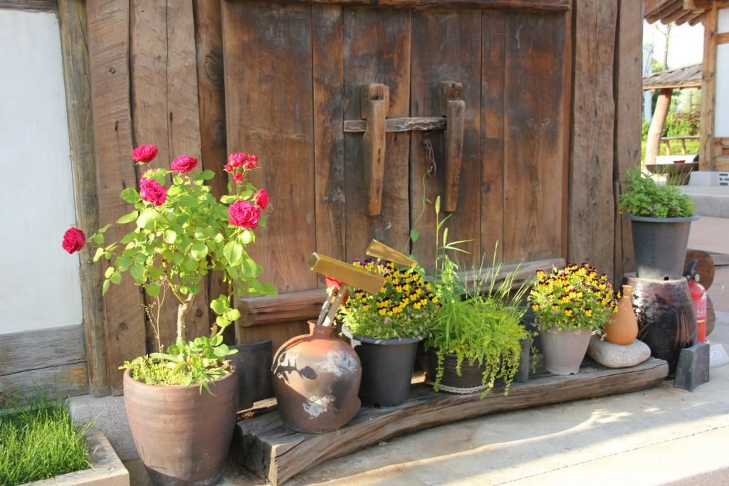 화분에서 자라는 다양한 식물들