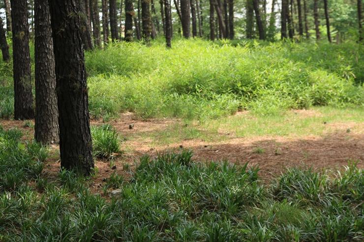 울창한 숲