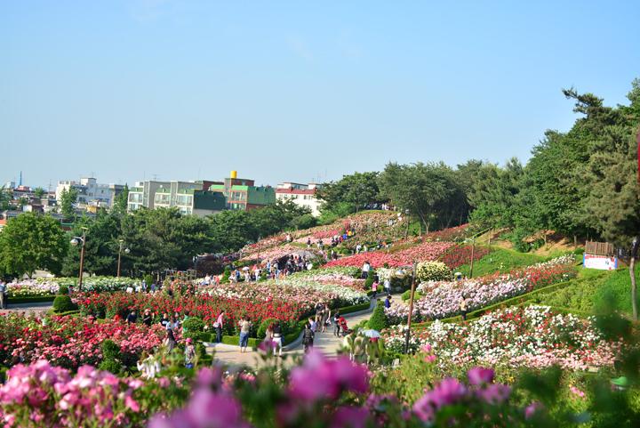 장미원 풍경