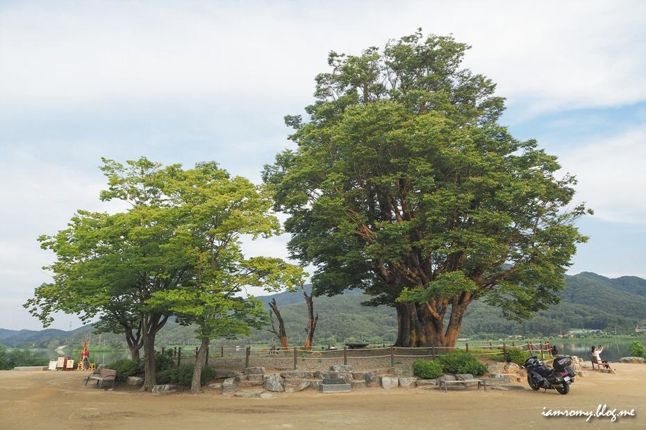 커다란 느티나무