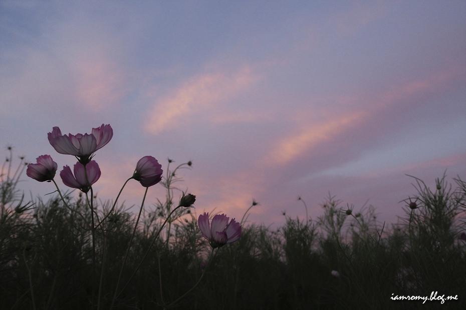 해질녘의 들판 위 꽃