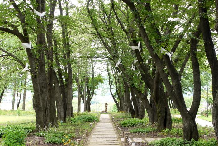 벚나무길 산책로