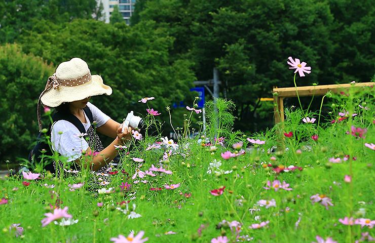 꽃밭에서 사진을 찍는 사람