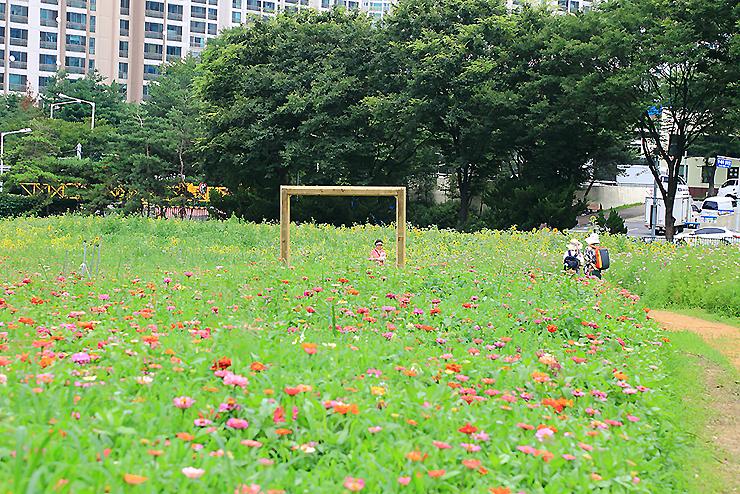 꽃밭에서 사진을 찍는 사람들