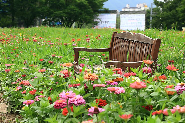 꽃밭 사이의 벤치