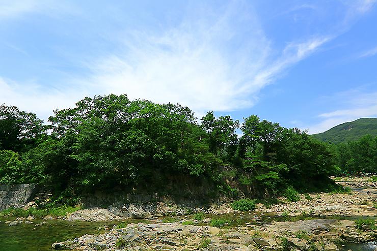 강 건너편 푸른 숲