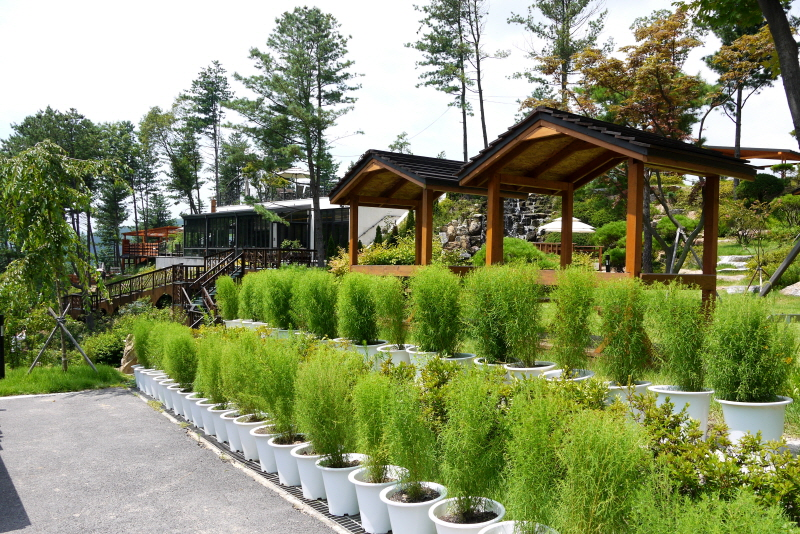 식물들이 가득한 주변