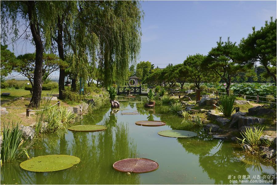 연못 위에 떠 있는 커다란 연잎