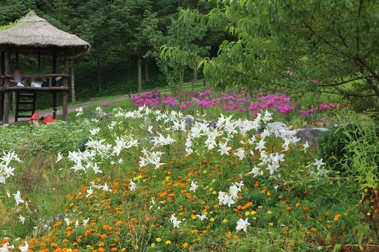 화단에 핀 다양한 꽃들