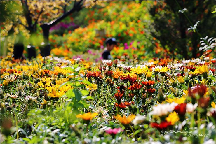 야외 정원의 다양한 꽃들