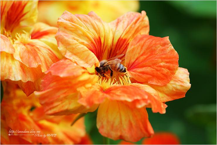 꽃 위에 앉은 벌