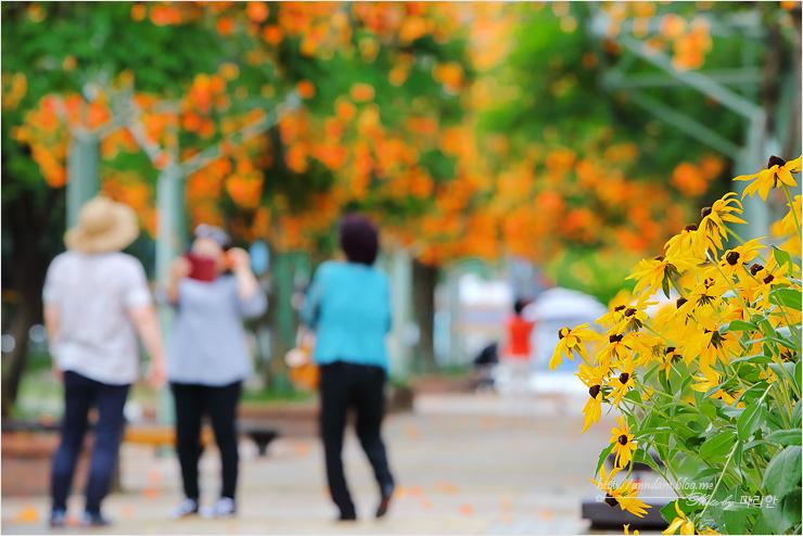 꽃의 접사사진