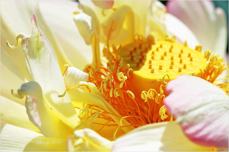 연꽃의 근접사진
