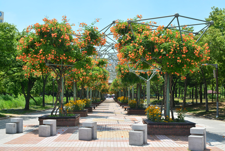 능소화가 핀 중앙공원