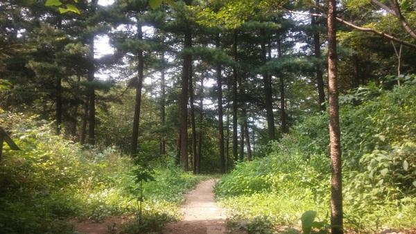 숲속 산책길
