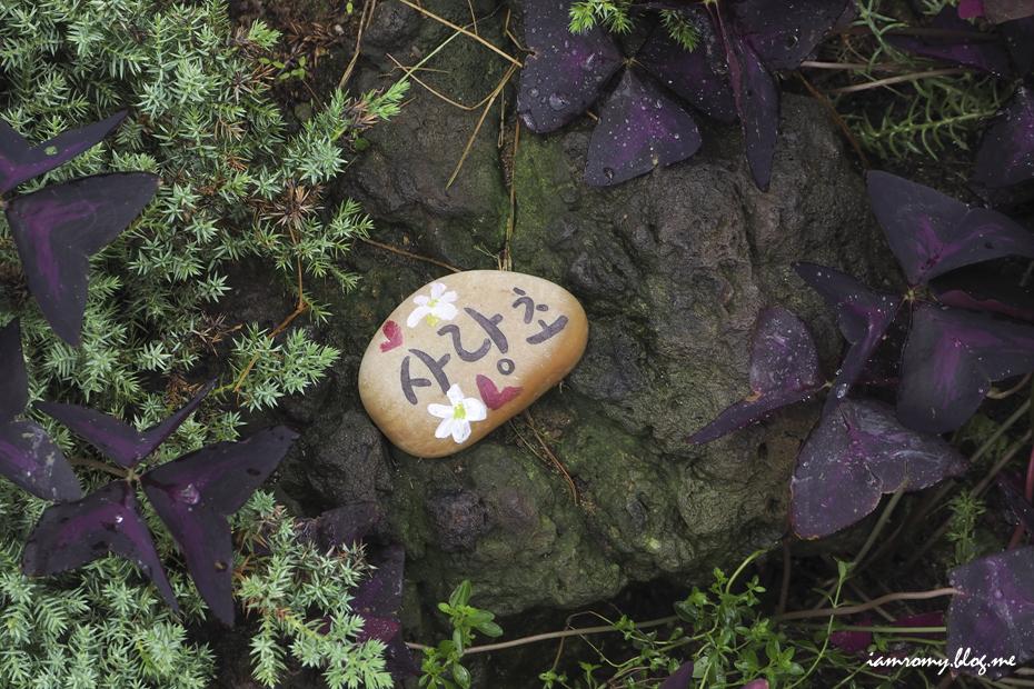 온실 안에서 자라는 사랑초 사진