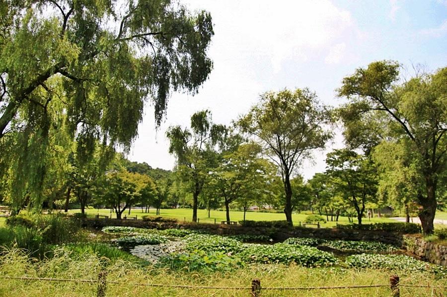 연못의 전경과 심어진 나무들