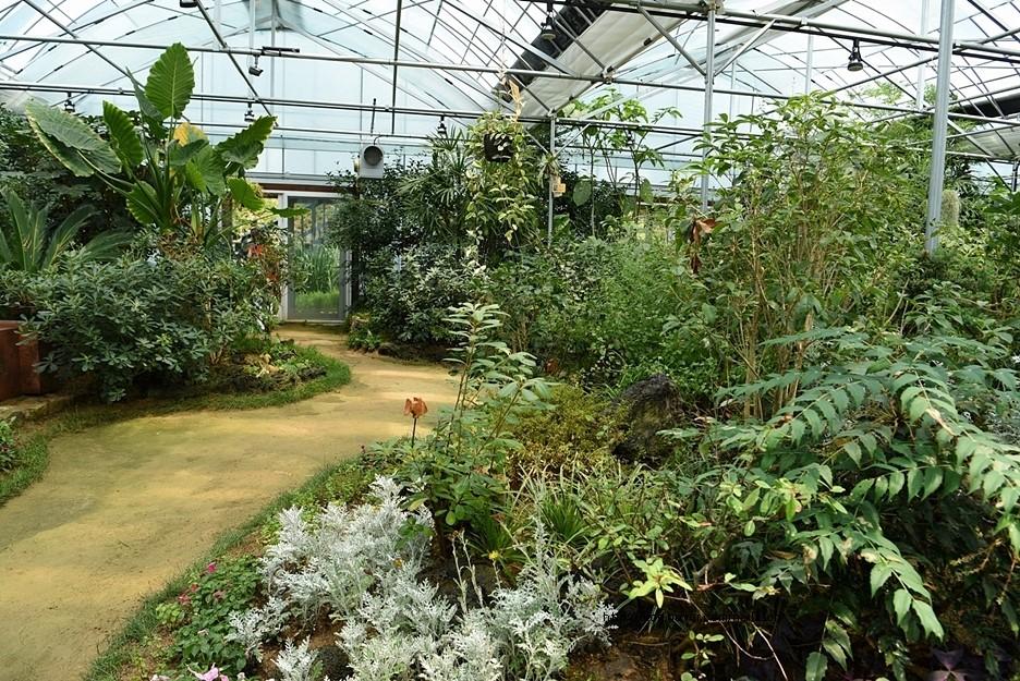 실내 가든에서 자라는 식물들