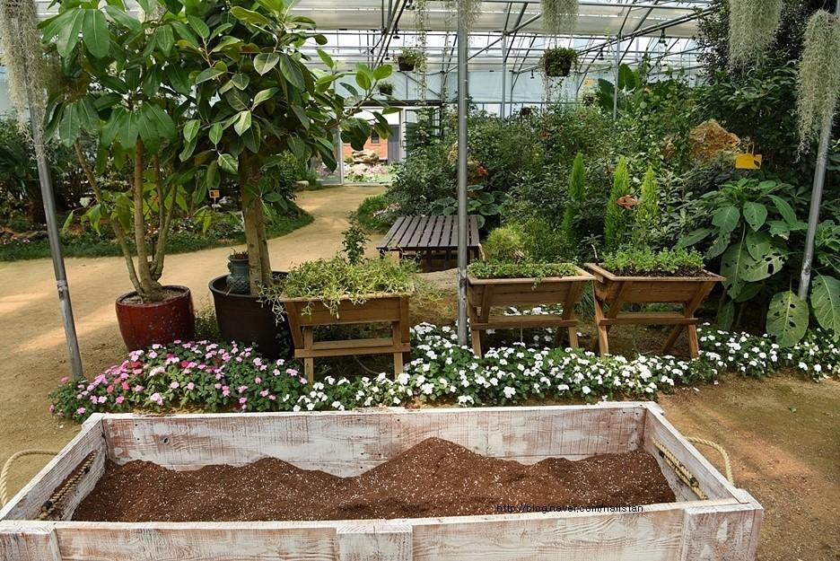 다양한 식물들의 모습