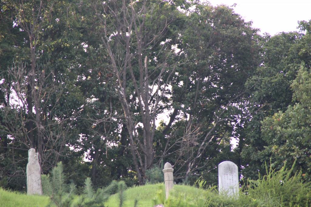 조광조 선생의 묘소