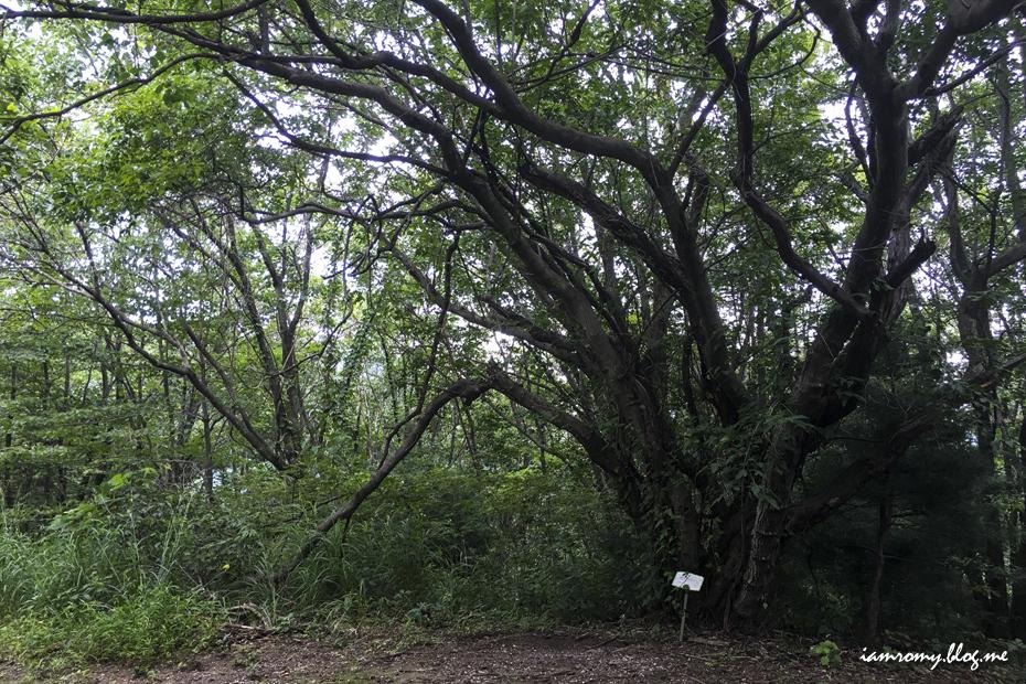 서리산의 숲길