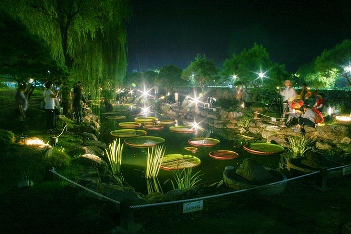 카메라 플래쉬에 밝게 빛나는 빅토리아 연못