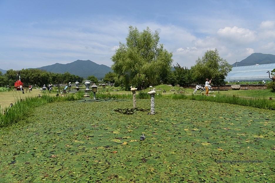 연잎이 떠 있는 연못