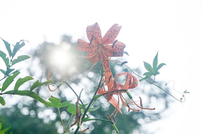 비에 젖은 꽃