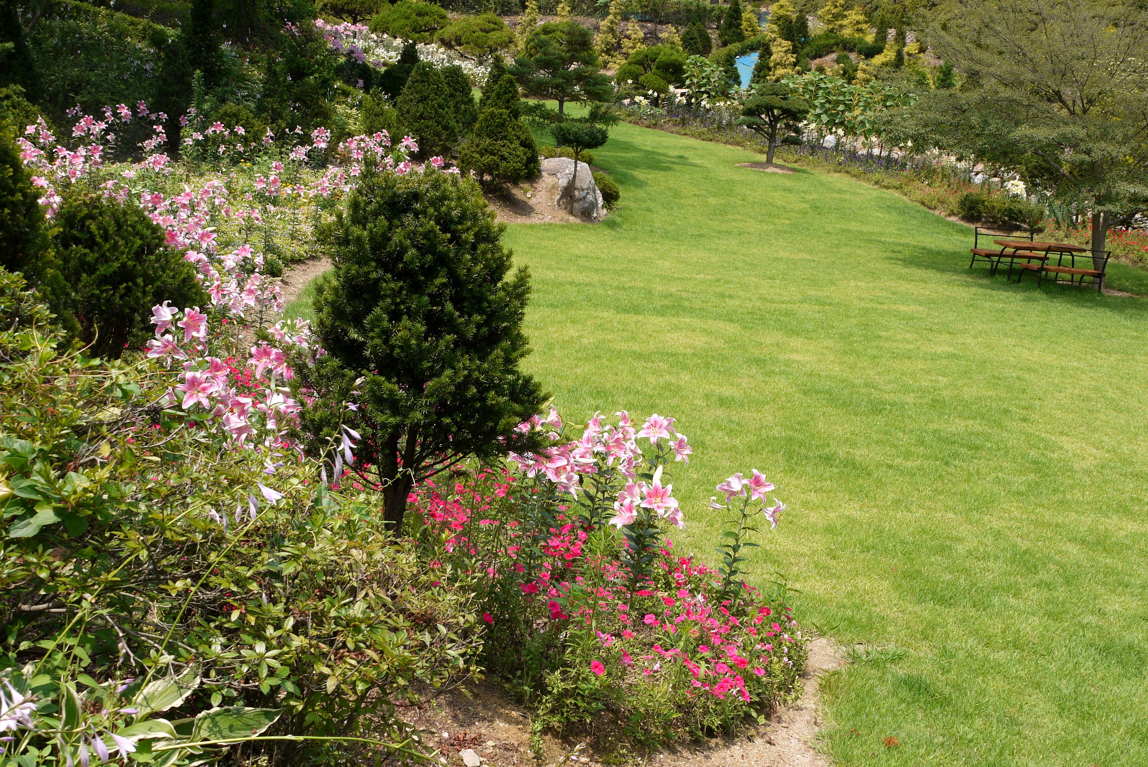 들판 한쪽에 피어있는 꽃들