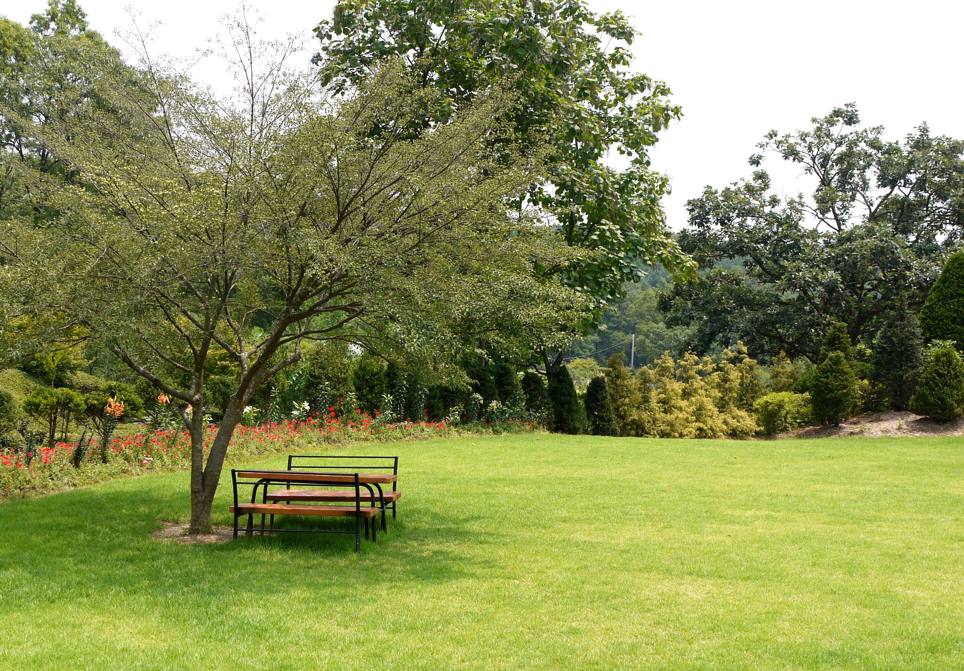 잔디밭 한쪽에 나무 그늘이 드리운 벤치